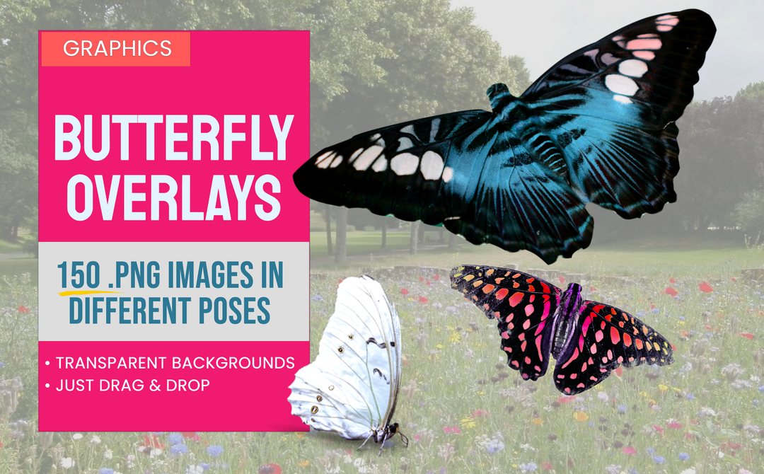 Butterfly PNG Graphics